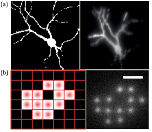 Fluorescence excitation of a neuron with the system. Extracted from Fig. 3 of the paper